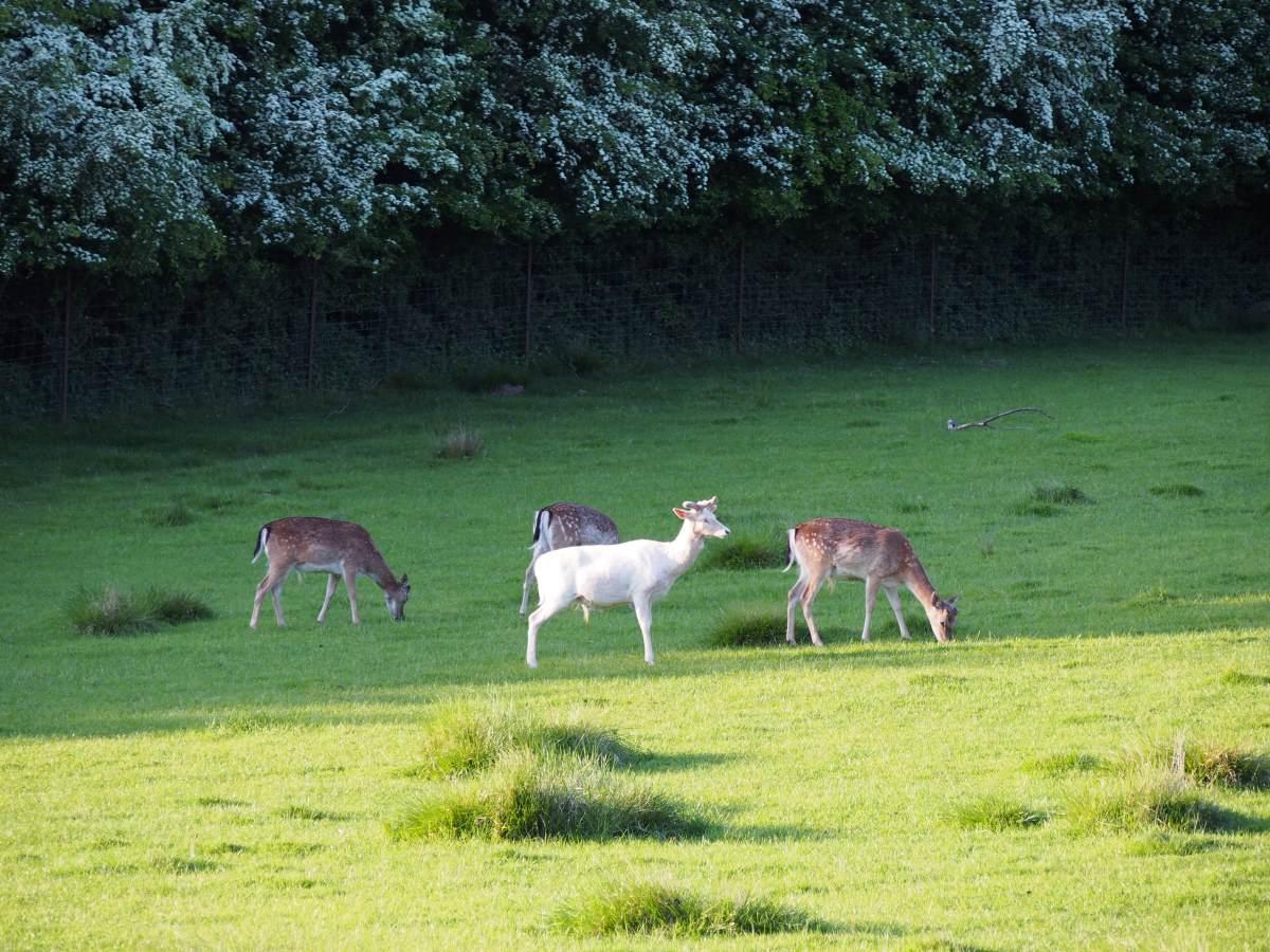 Haderslev deer park.